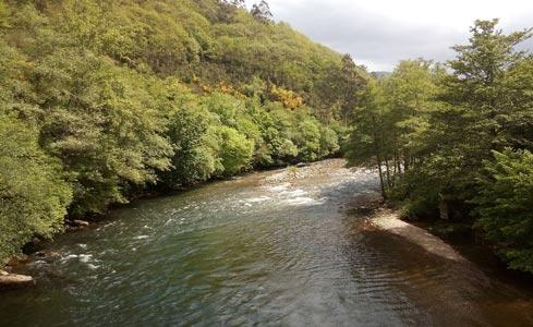 Capturas río Narcea - Nalón